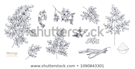 Set of Hand drawn exotic tropical flowers in contour style  Stock photo © Margolana