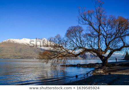 Göl dijital fotoğraf makinesi kız ağaç spor yaz Stok fotoğraf © jomphong