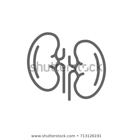 Menselijke nier icon vector schets illustratie Stockfoto © pikepicture