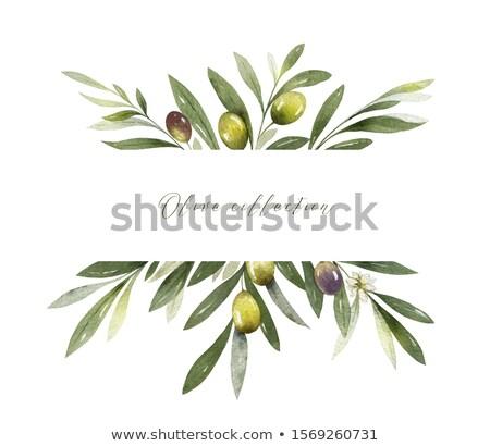 Botanikus olajfa ágak levelek nyár gyönyörű Stock fotó © Anneleven
