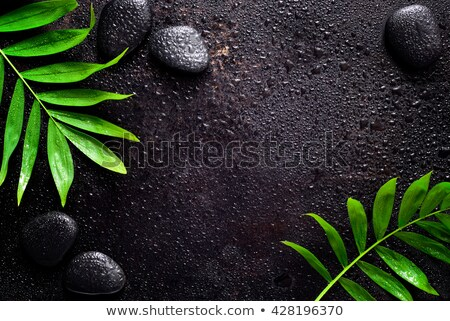 Zen concept, fresh green Leaves and pebbles Stock photo © Ansonstock