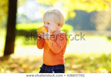 ребенка мальчика еды груши студию портрет Сток-фото © igabriela