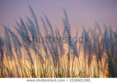 erba · vento · erba · verde · cielo · primavera - foto d'archivio © bendicks