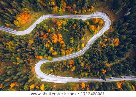 sonbahar · yol · renkli · yeşillik · orman · ağaç - stok fotoğraf © vividrange