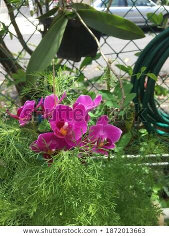 Rood · witte · orchidee · bloem · bloemen - stockfoto © 3523studio