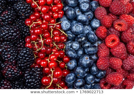 Stock photo: Tasty red and black currant berries on blue