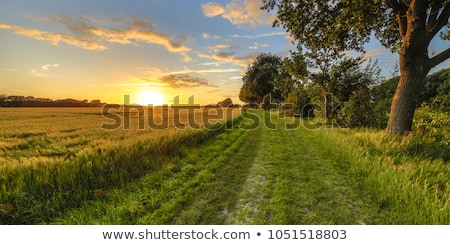 Sunset in countryside Stock photo © filmstroem