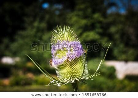 été vert parc objet croissant fleuriste Photo stock © arturasker