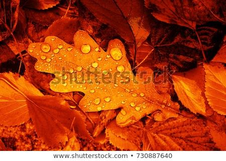 sonbahar · yaprak · doğa · arka · plan - stok fotoğraf © nneirda