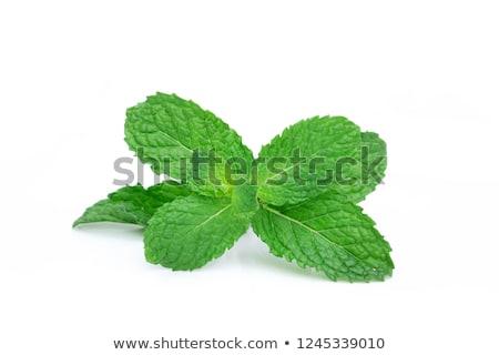 新鮮な ミント 白 葉 緑 ストックフォト © Masha