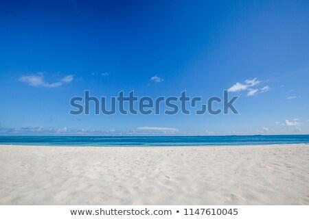 boa · giallo · tropicali · Caraibi · mare - foto d'archivio © thomaseder