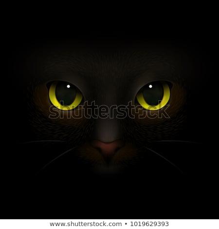 Puss Monster Stock photo © cteconsulting