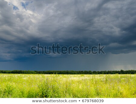 Cloudy sky over yellow field stock photo © azjoma