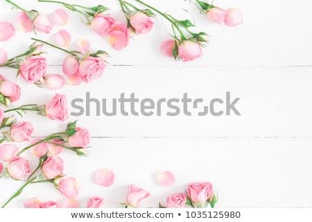 bloem · bloemen · bloeien · voorjaar - stockfoto © stocker