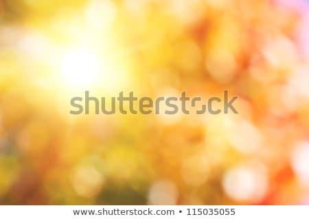 秋 ぼけ味 明るい 自然の美 太陽 自然 ストックフォト © gitusik