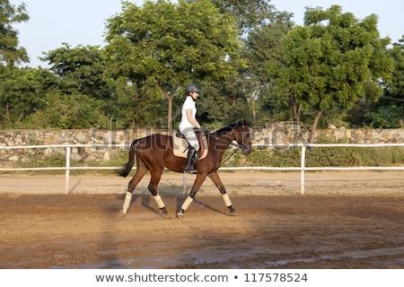 paard · lopen · afbeelding · vallen · paarden · ras - stockfoto © meinzahn
