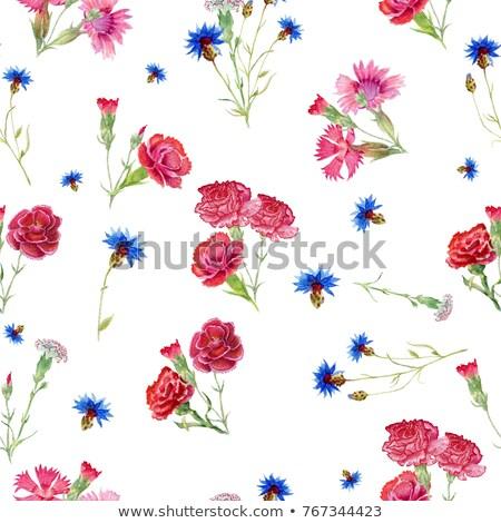 carnation dianthus flower Stock photo © stocker