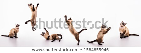 коллекция прыжки котят действий белый лице Сток-фото © c-foto