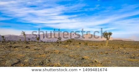 Umman Arapça yarımada gün batımı doğa yalnız Stok fotoğraf © meinzahn