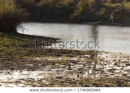 Small pond surrounded by long grasses stock photo © sarahdoow