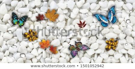 Kelebek taş oturma bakıyor güzellik kanatlar Stok fotoğraf © valpict