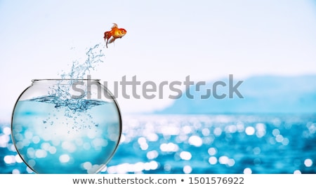 bonitinho · peixe-dourado · aquário · listrado · plástico · saco - foto stock © gemenacom
