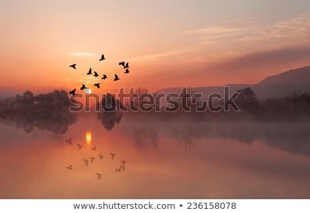 Stock fotó: Galamb · madarak · ősz · fák · pihen · drótok