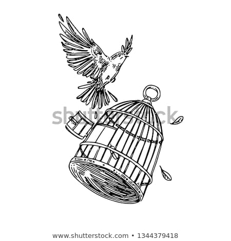 sketch bird cage in vintage style stock photo © kali