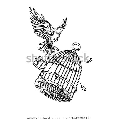 mão · gaiola · vetor · feminino · aves - foto stock © kali
