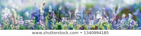 Belle prairie beauté vert bleu Photo stock © Julietphotography