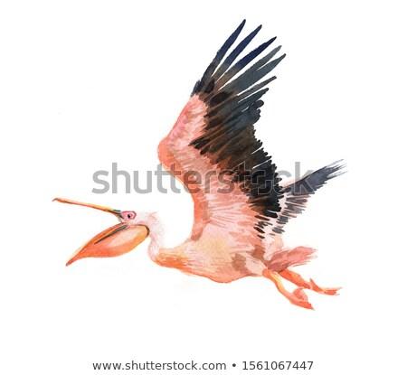 Stock photo: Flying Pelican