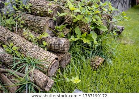 лет древесины области зеленый Сток-фото © tainasohlman