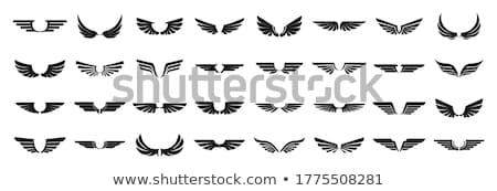 winged insignia  Stock photo © oblachko