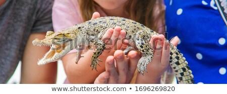 Család krokodilok illusztráció természet zöld vicces Stock fotó © adrenalina