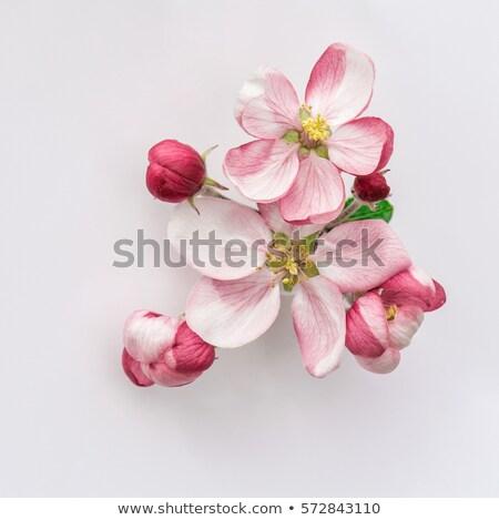 keret · gyümölcsfa · virágok · tavasz · kezdet · égbolt - stock fotó © taigi