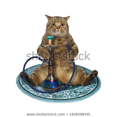cat with tobacco-pipe Stock photo © Mikko