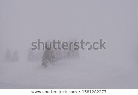 hegyek · tél · tájkép · kunyhó · hegy · erdő - stock fotó © Kotenko