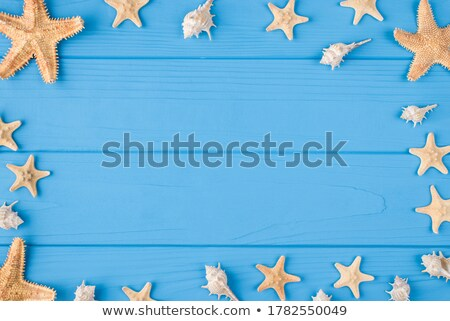 Tropical shells ans starfish on a beach Stock photo © Kacpura
