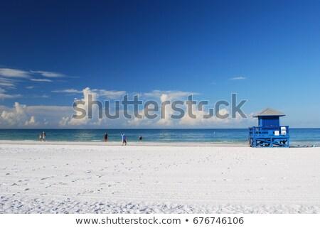 Флорида · растительность · воды · пейзаж · зеленый - Сток-фото © arenacreative