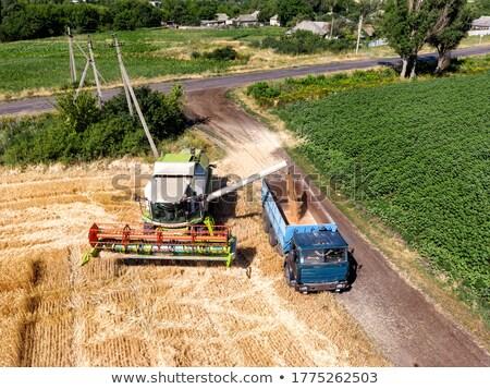 Modern combine harvester unloading green corn into the truck  Stock photo © lightpoet