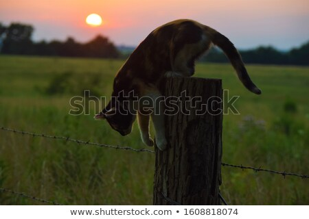 Cat on a Fence Post Stock photo © 2tun