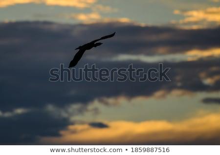 Preto voador pôr do sol céu azul paisagem Foto stock © mariephoto
