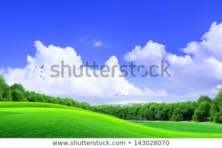 Stock fotó: Zöld · fű · naplemente · napos · égbolt · panoráma · szalag