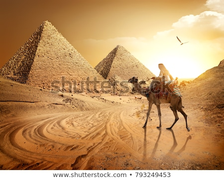 camels in egyptian landscape Stock photo © adrenalina