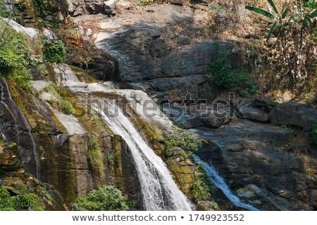 Esőerdő szirt illusztráció fa természet tájkép Stock fotó © bluering