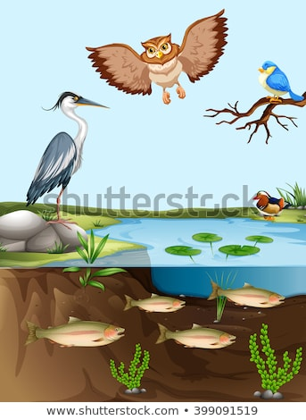 птиц рыбы пруд иллюстрация пейзаж фон Сток-фото © bluering