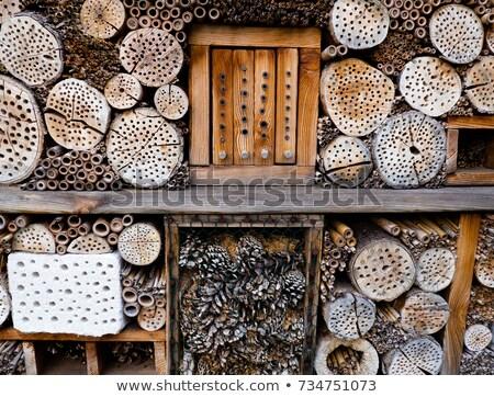 Különböző bogarak kert illusztráció ház pillangó Stock fotó © bluering