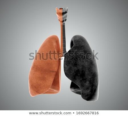 Human Lungs, 3d Illustartion isolated black background Stock photo © tussik