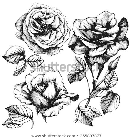 Siyah beyaz gül çiçekler grunge iki eski Stok fotoğraf © sherjaca