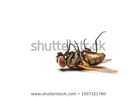 halott · szett · fehér · hát · halál · lábak - stock fotó © kidza